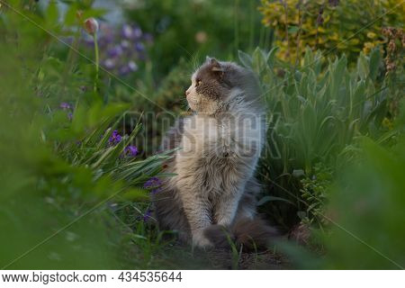 House Cat On The Grass In The Garden By Flowers