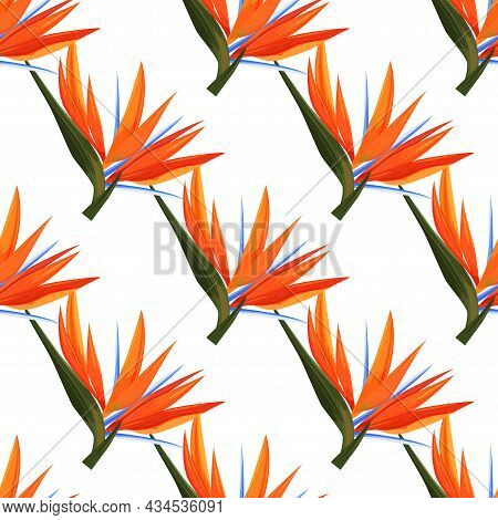 Seamless Pattern Of Colorful Strelitzia Flowers. Vector Exotic Flowers Bird Of A Paradise Isolated O
