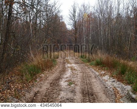 Dull, Bleak And Deserted Forest In Late Autumn. Fall Forest Road With Bare Trees And Fallen Foliage