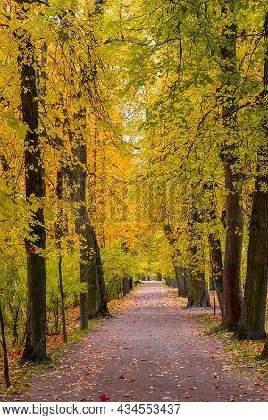 Alley In Catherine Park In Autumn, Tsarskoe Selo (pushkin), St. Petersburg, Russia
