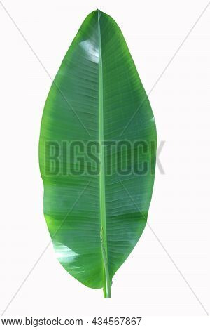 Banana Green Leaf Di-cut On Isolated Background With Sunlight On Plant Leaf Surface