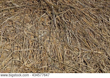 Natural Plant Texture From Dry Brown Gray Grass In A Field
