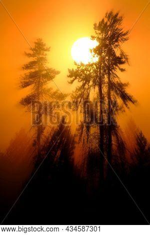 Sunlight shining golden orange in morning mist and fog in pine tree forest wilderness