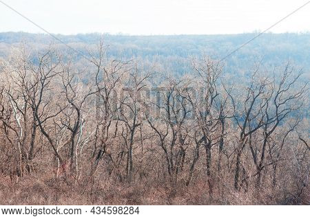 Forest With Bare Trees . Woodland In The Spring
