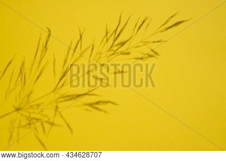 Trending Concept In Natural Materials With Plant Shadow On Yellow Background. Presentation With Dayl