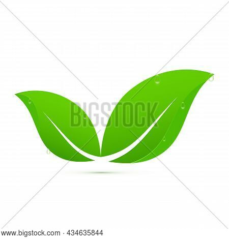 Green Leaves With Water Drops Logo Vector Illustration