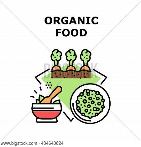 Organic Food Vector Icon Concept. Agricultural Carrot And Salad Organic Food Growing In Garden, Natu