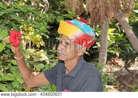 Close-up Portrait An Old Farmer Of Indian Origin Looking At The Red Flower Of Hibiscus And A Senior