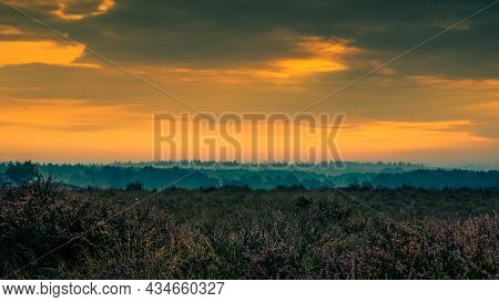 Early Morning Mist Over A Dutch Moorland Landscape Heather Field At Sunrise. Early Morning Picturesq