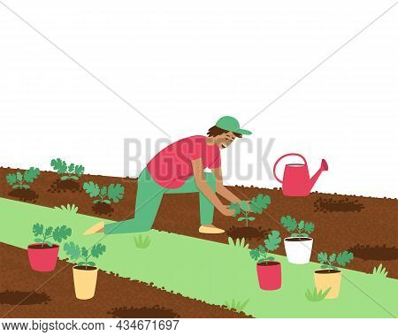 A Farmer Man Is Planting Watermelon Sprouts. A Man Holds A Small Seedling In His Hand. Planting And
