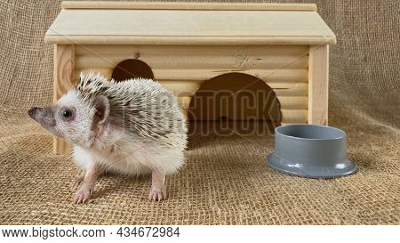 Little Hedgehog And It's House On Burlap Background