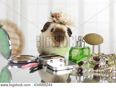 Amusing Guinea Pig Looks In A Cosmetic Mirror At The Makeup Table Indoors