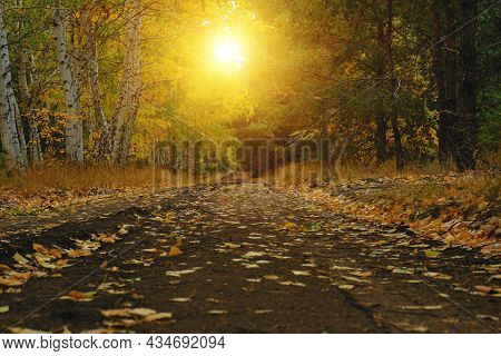 Forest Autumn Road Is Covered With Fallen Yellow Foliage.birch And Pine Forest In Autumn