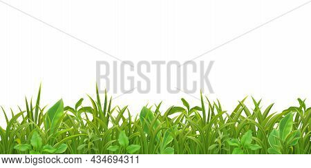 Grass Herbs Young Plants Seedlings Green Leaves Decorative Realistic Seamless Border Pattern On Whit