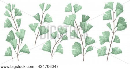 Ginkgo Biloba Known As The Ginko Or Gingko Leaves And Seeds On Branches Isolated Illustration. Ginkg