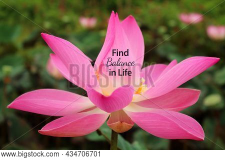 Inspirational Quote - Find Balance In Life. On Red Pink Lotus Flower Or Nelumbo Nucifera Blossom In