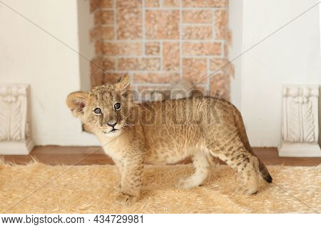 Portrait Of A Beautiful Little Lion Cub In The Studio. Little Lion On The Background Of The Fireplac