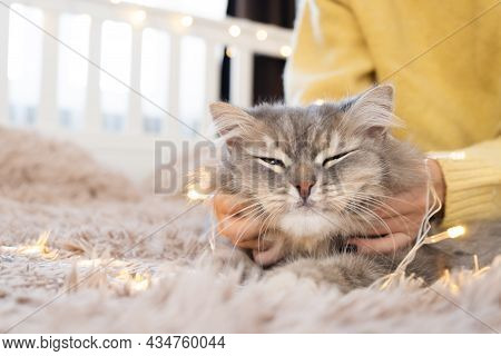 A Cute Girl In A Yellow Sweater Plays With A Gray Cat On The Bed. Young Woman Petting A Domestic Cat