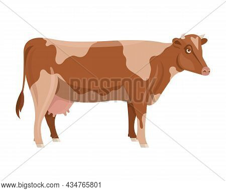 Bulls And Cows Vector. Bull Silhouette Isolated