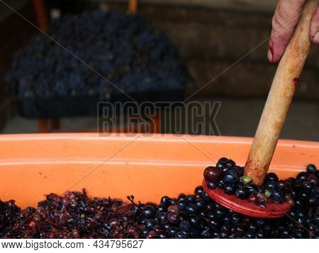 Wooden Crush In The Hand Of The Grower Kneading Bursting Ripe Berries, The Process Of Crushing Grape