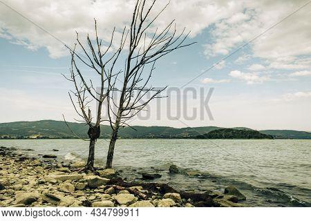 Two Lonely Trees On The Shores Of Lake Trasimeno, Isola Maggiore, Tuoro Sul Trasimeno, Umbria, Italy