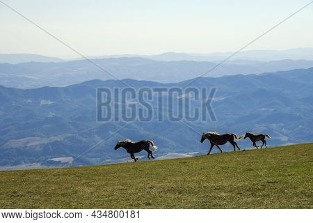Wild Horses Running In The Meadow Of The Monte Cucco Park, Umbria, Italy