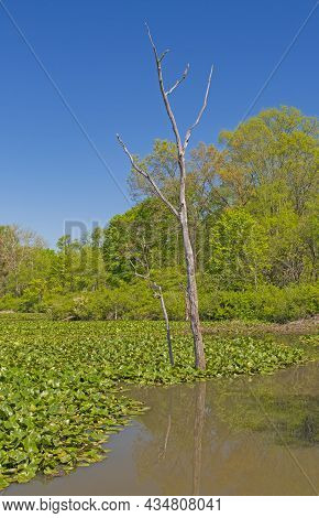 Wetland Marsh In Spring In Cuyahoga Valley National Park In Ohio