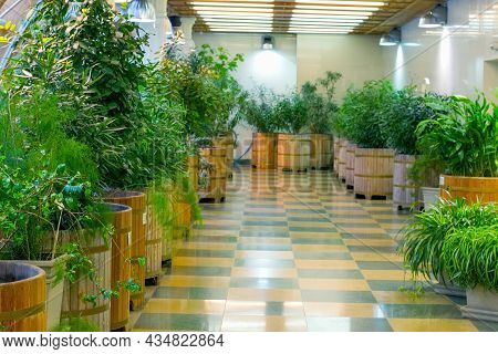 Large, Spacious, Bright Greenhouse With Rows Of Plants In Wooden Pots. Full Spectrum Lamps Provide G