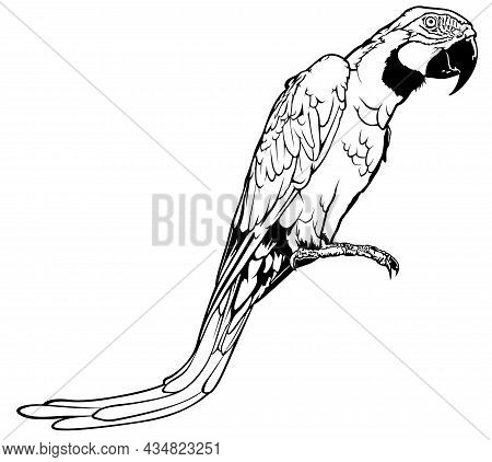 Black And White Perched Macaw Parrot - Outlined Illustration, Vector