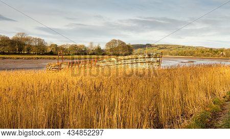 An Old Ship Wrecked Wooden Boat Amongst Long Estuary Salt Marsh Grass On The River Dee At Kirkcudbri