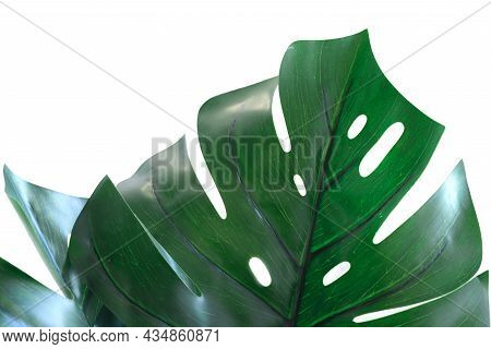 Large Leaf Of Monstera Is Isolated On A White Background. Tropical Leaves. Space For Text. Mocap, Cr
