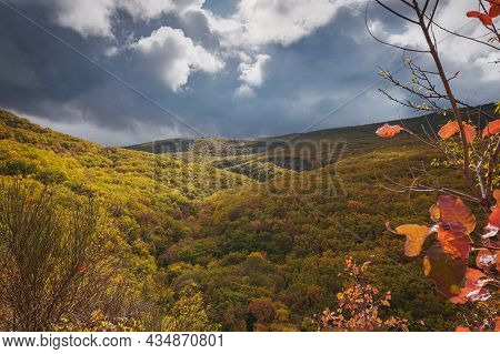 Landscape Autumn Season In Rainy Day Road Travel And Yellow Leaves
