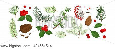 Christmas Vector Colored Plants, Holly Winter Decor, Tree, Fir, Pine And Cone, Berry, Leaves Branche