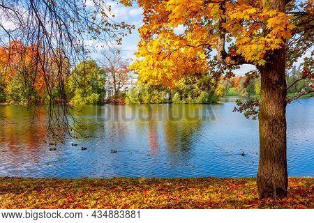 Autumn Foliage And Grand Pond In Catherine Park, Pushkin (tsarskoe Selo), Saint Petersburg, Russia