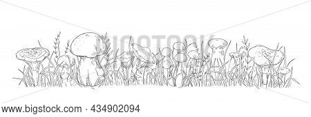 Organic Mushrooms. Hand Drawn Wild Forest Funguses Growing In Grass. Natural Black And White Sketch