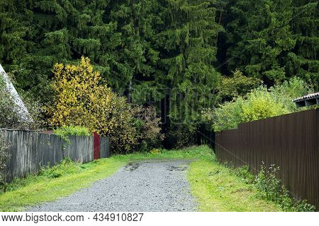 Rural Road Goes Into Pine Forest Along Fences Of Private Houses. Simple Rural Background, Private Se