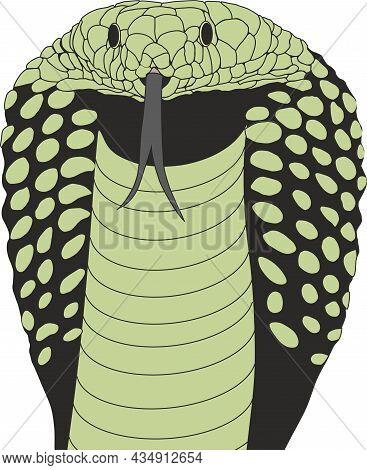 Cobra Looking Straight, King Cobra, Snake, Cobra Head, King Cobra Head