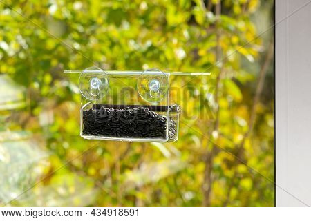 Window Feeder With Suction Cups For Birds On A Sunny Autumn Day.