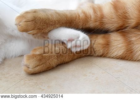 Ginger Cat And White Cat Laying On The Floor Together At Home.  Closeup Of Cat Paws On The Floor.  T