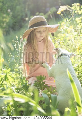 Little Girl Playing With A Dog Breed Jack Russell Terrier