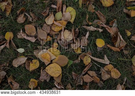 Autumn Leaf Fall. Autumn Background. Fallen Yellow Leaves On Green Grass.