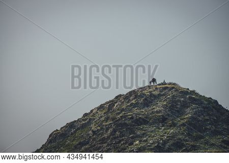 Atmospheric Nature Landscape With Horse High On Mountain Top Under Gray Clear Sky In Dusk. Minimalis
