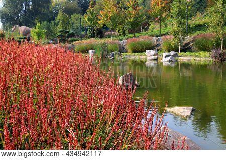 Karl Foerster Grass, Calamagrostis Acutiflora Grows In Park Landscape. Popular Beautiful Perennial O