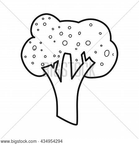 Vector Illustration Of Broccoli And Cabbage Symbol. Set Of Broccoli And Doodle Stock Symbol For Web.