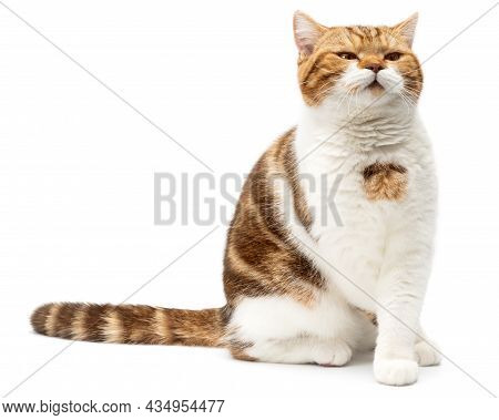 Angry Cat Grumpy And Serious Looking In Camera Isolated On White Background, Front View. Cat Sitting