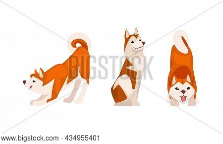 Shiba Inu As Japanese Breed Of Hunting Dog With Prick Ears And Curled Tail In Sitting Pose Vector Se