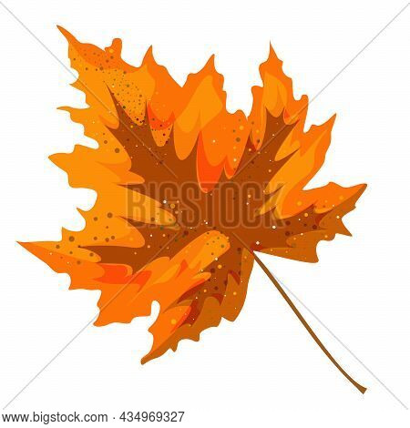 Vector Realism Of A Stylized Autumn Leaf On A White Background. Eps 10. Concept. Cartoon