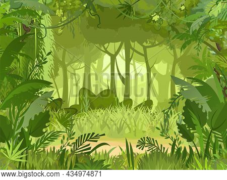 Sandy Glade. Jungle Background. Plants Rainforest. Beautiful Green Landscape With Exotic Trees And P