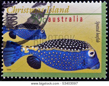 AUSTRALIA - CIRCA 1996: A stamp shows an image of Spotted boxfish christmas island