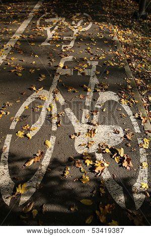 Bike road and leaves